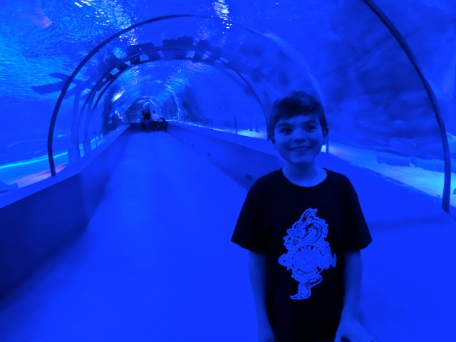 This tunnel was so cool!  We could see sharks swim over us!