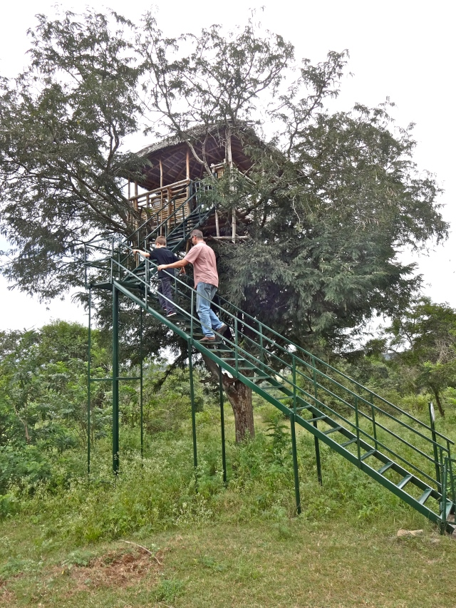 Going up the tree house earlier in the day.