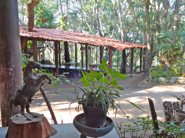 The dining area: a great place to enjoy delicious food and nature at the same time!