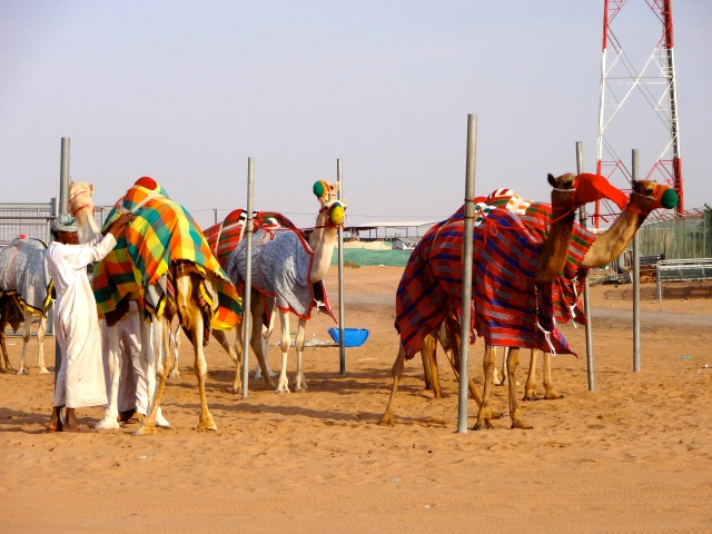 I wish we could have seen the camels race!